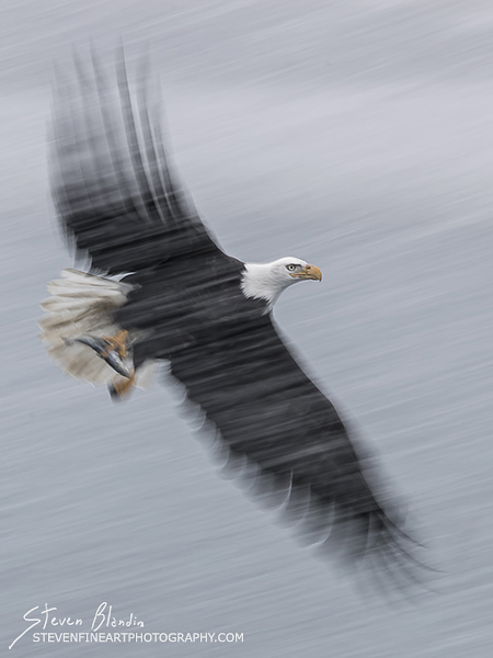 Artistic Blur_Bald Eagle Photography