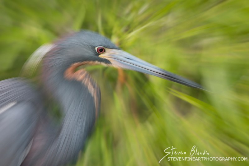 Zoom Blur_Bird photography