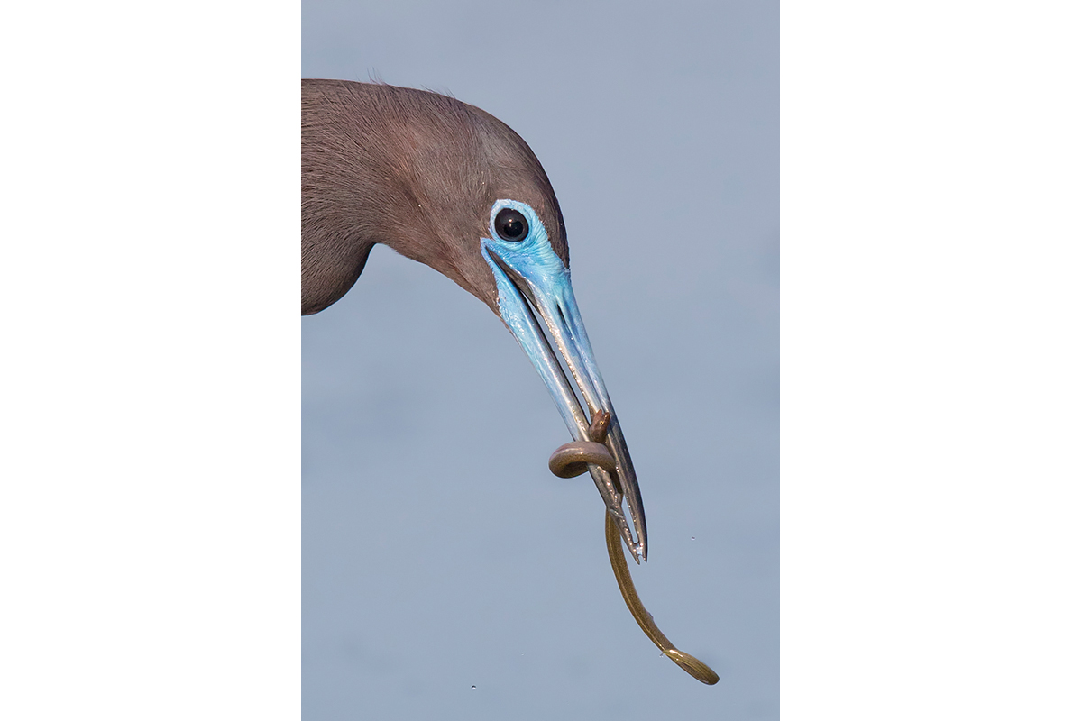 Fine Art Florida Birds