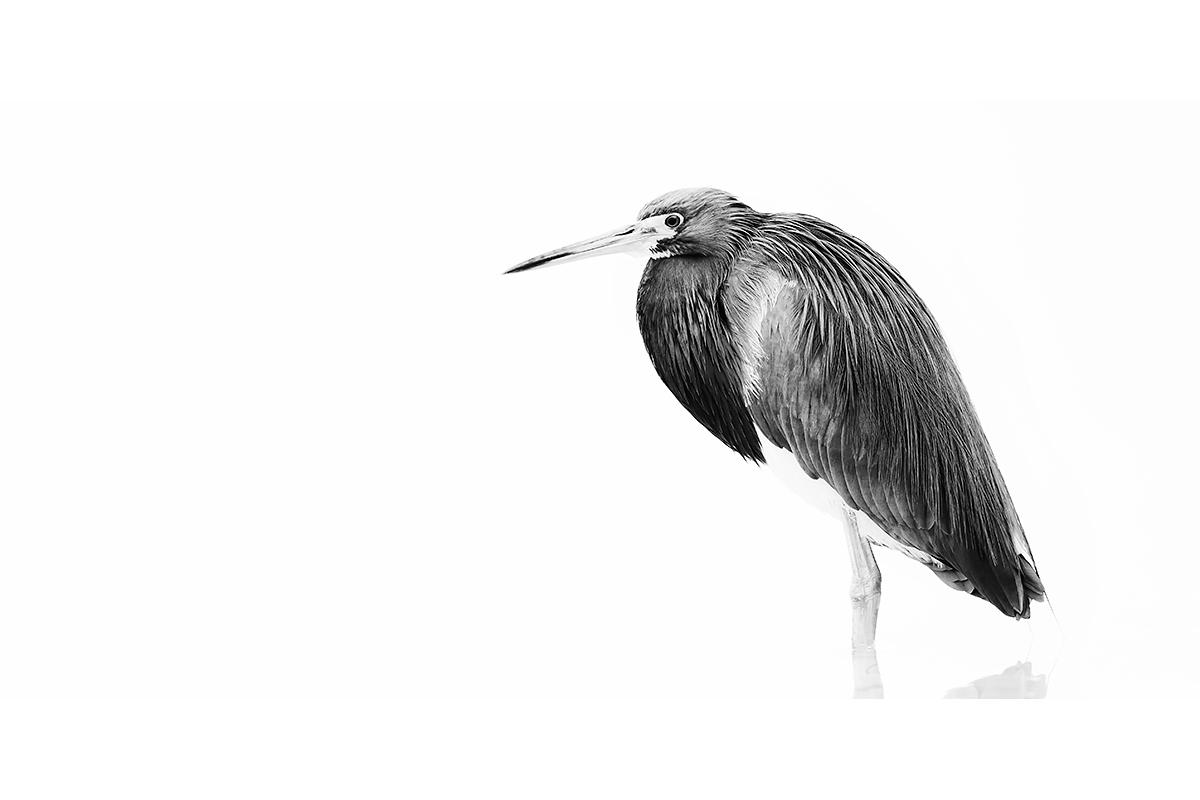 Black and White_Fine Art_Tricolored Mist