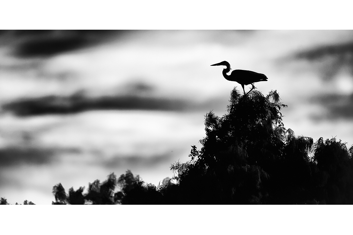 Black and White_Fine Art_On Top Of The Green Mountain