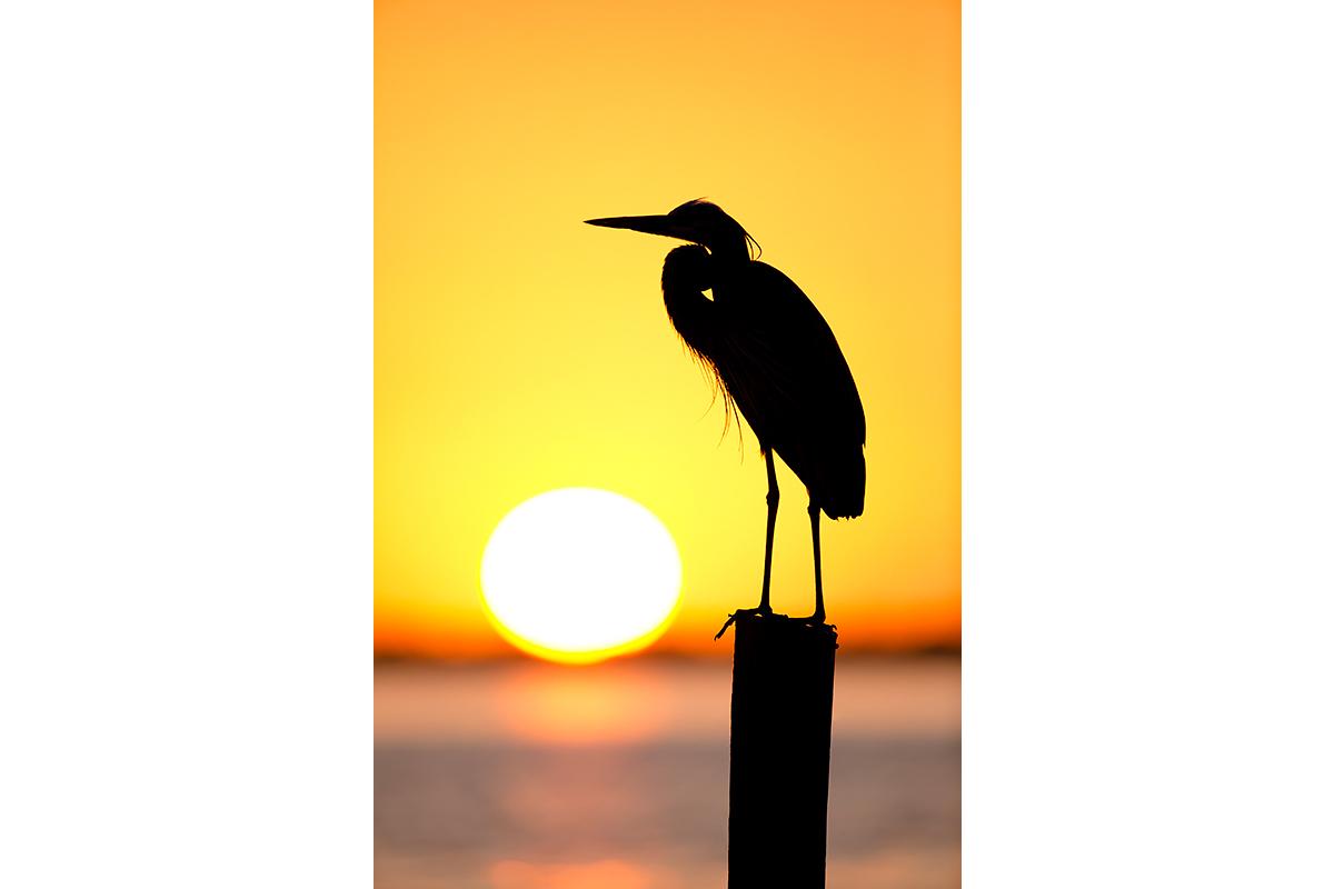 Fine Art Florida Birds_Sunset Silhouette