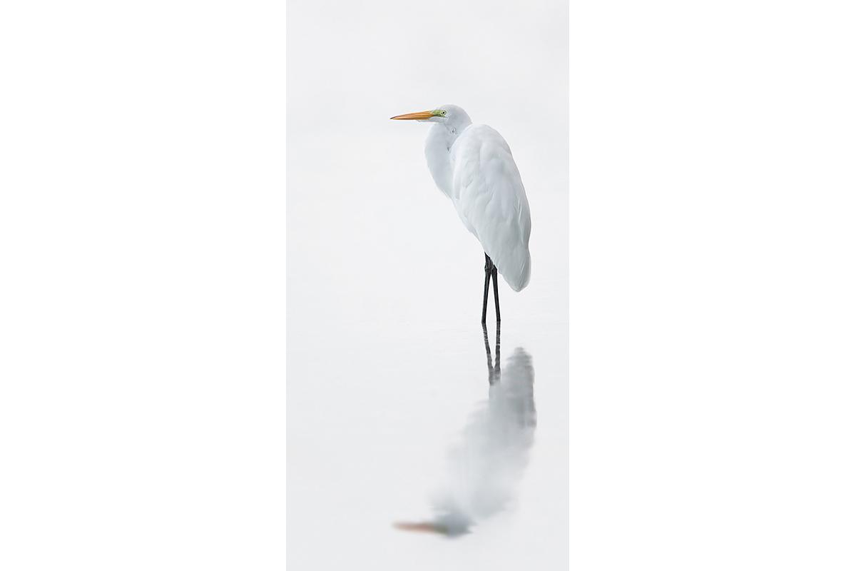 Fine Art Florida Birds_White On White
