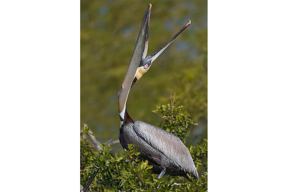 Fine Art Florida Birds_Head Throw