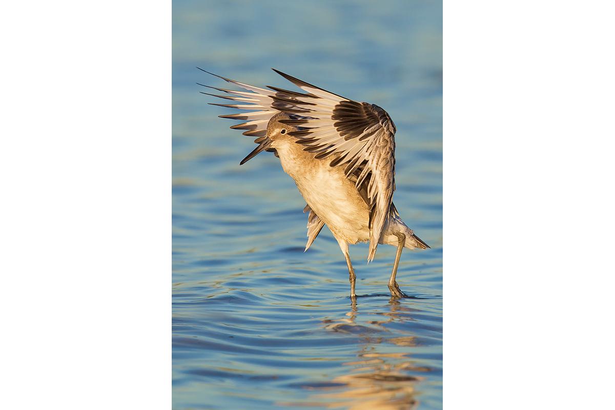 Fine Art Florida Birds_Flapping Stroll