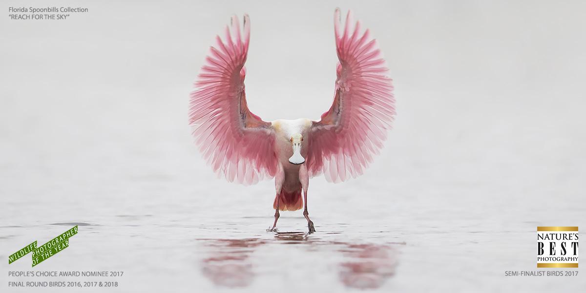 Florida Bird Photography Tours_Reach For The Sky