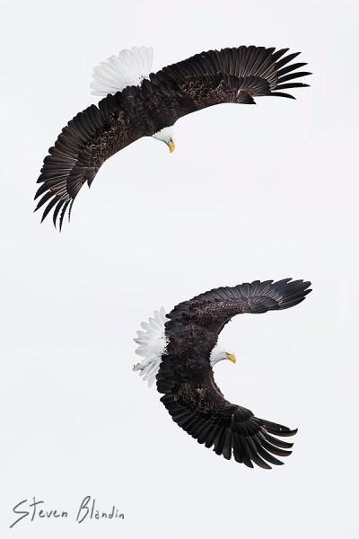 Canon EF 100-400mm L IS II USM_Bird Photography2