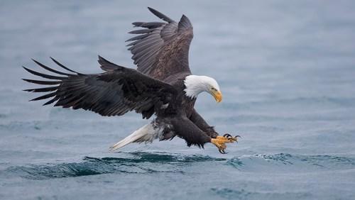 Alaska Bald Eagle Photography Tour_03