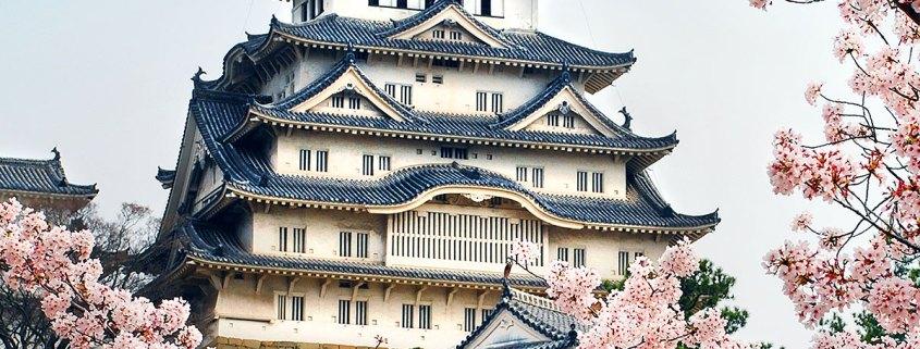 Himeji castle through Sakura
