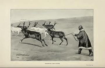 Reindeer-facing page237_1