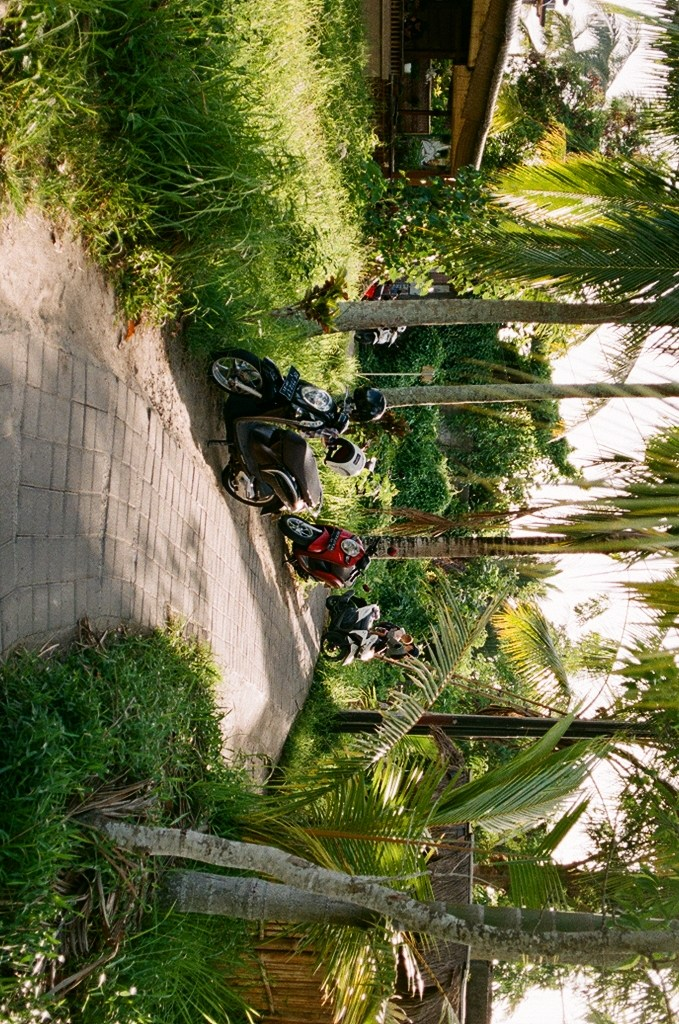 Analogue photo of a paved pathway through the rice fields of Ubud