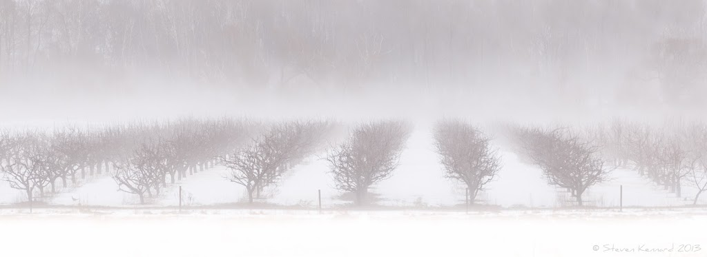 Orchards in the fog - Steven Kennard 2013