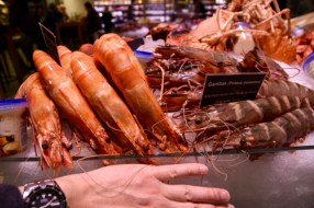 The shrimps are gigantic!