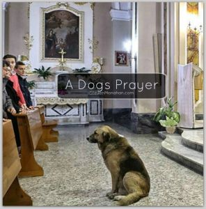 Dogs Prayer to Pope Francis