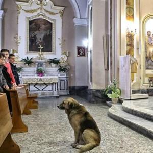 Dogs Prayer for Mercy