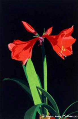Amaryllis limited edition lithograph by Steven Ray Miller Durham NC artist
