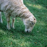 Stewie (I think)