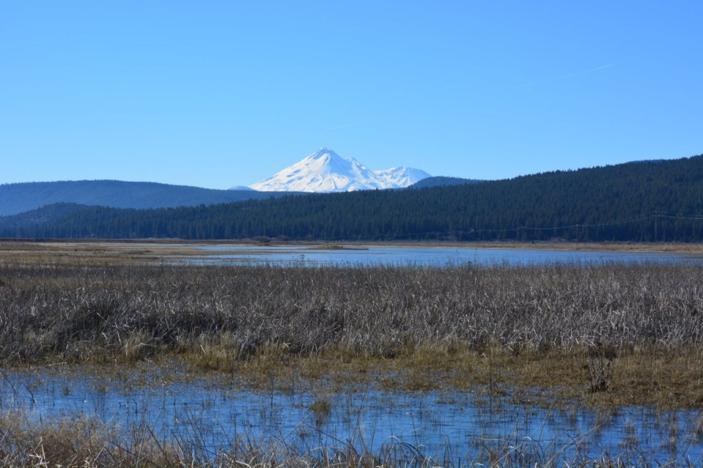 Butte Valley Wildlife Area with Mount Shasta in background