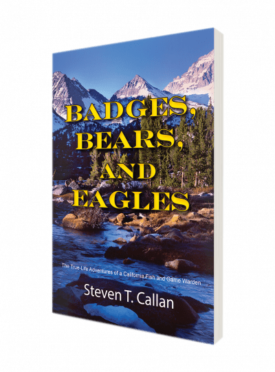 badges_bears_slanted
