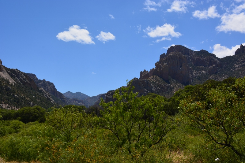 Entrance to Cave Creek Canyon and the Chiricahua Mountains. All photos by Steven T. Callan.