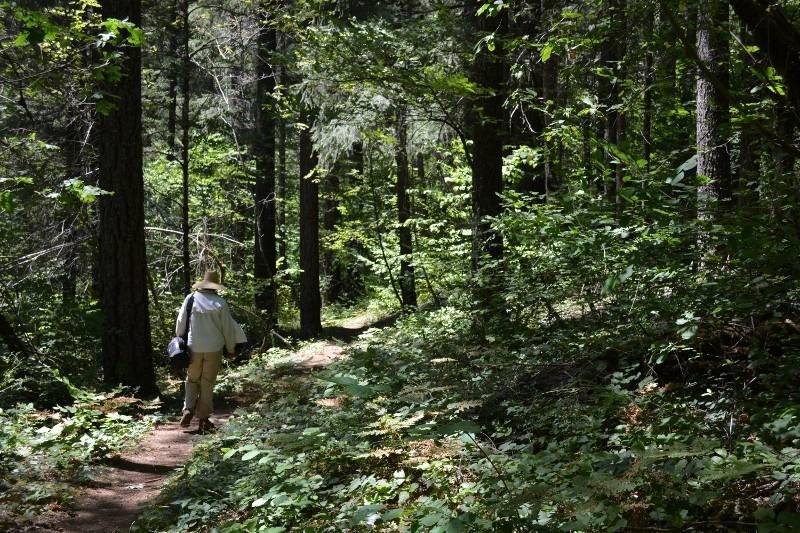Kathy hiking through riparian vegetation along the McCloud River. Photo by author Steven T. Callan.