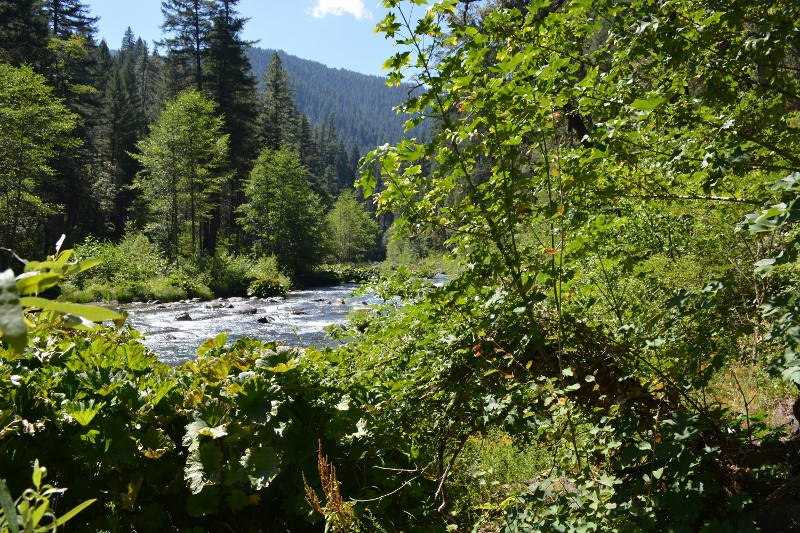 The McCloud River Preserve encompasses 2,330 acres surrounding this iconic mountain stream. Photo by author Steven T. Callan.