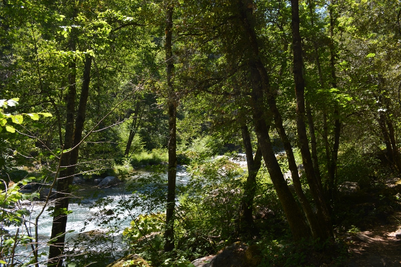 Riparian vegetation helps stabilize the banks of the McCloud River. Photo by author Steven T. Callan.