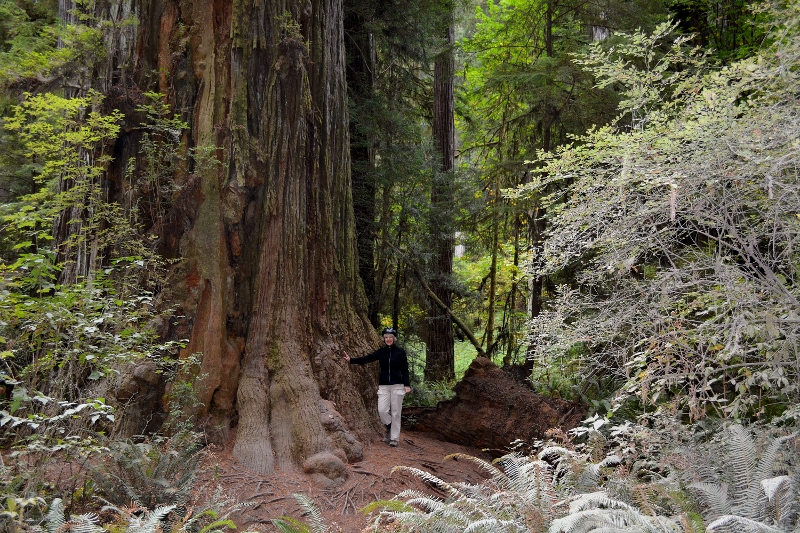 Kathy standing next to one of the tallest trees on Earth, in Redwood National and State Parks. Photo by Steven T. Callan.