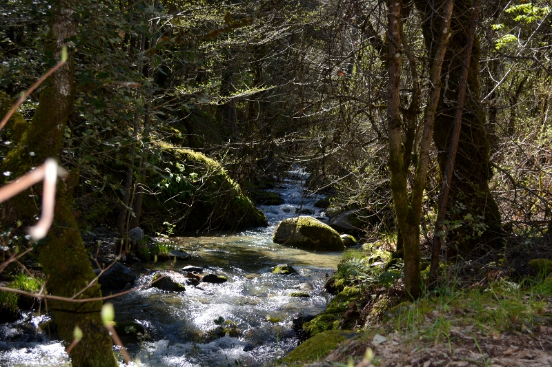 Mill Creek at Whiskeytown National Recreation Area. Photo by Kathy Callan.