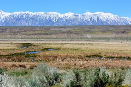 Panorama of Fish Slough. Photo by Steven T. Callan.