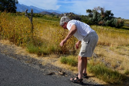 Steven T. Callan attempts to rescue a gopher snake on Lubken Canyon Road. Photo by Kathy Callan.
