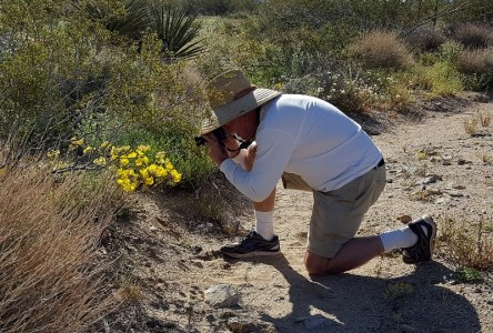 Author Steven T. Callan photographs desert wildflowers inside Joshua Tree National Park. Photo by Kathy Callan.