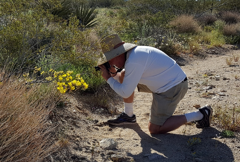 Author Steven T. Callan photographs desert wildflowers inside Joshua Tree National Park. Photo by Kathy Callan.
