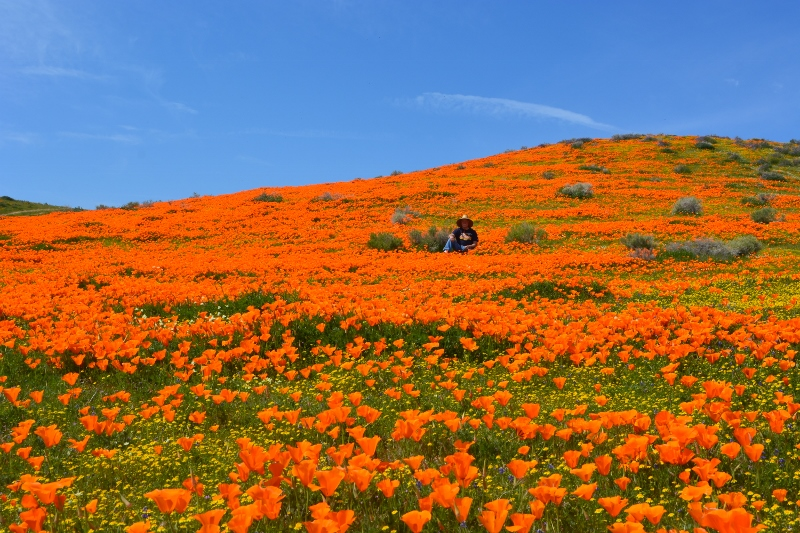 Author Steven T. Callan sits in a field of California poppies in the Antelope Valley, California. Photo by Kathy Callan.