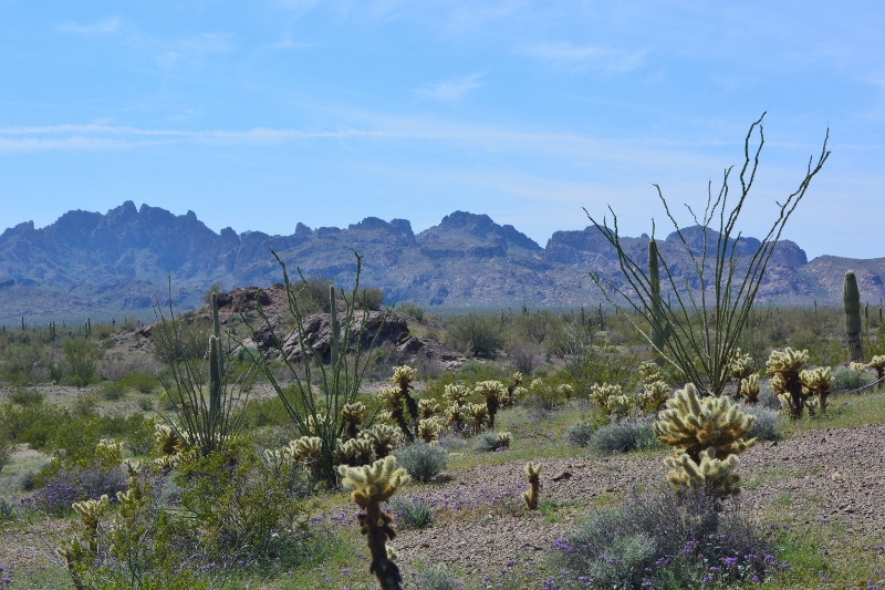A view of the Kofa National Wildlife Refuge with mountains in the distance. Photo by Author Steven T. Callan.