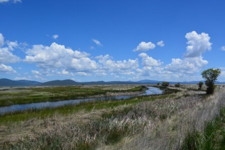 Birdlife abounds along the Butte Valley Wildlife Area auto-tour route.