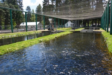 Mount Shasta Fish Hatchery raceway ponds appear much the same today as they did during the summer of 1966.