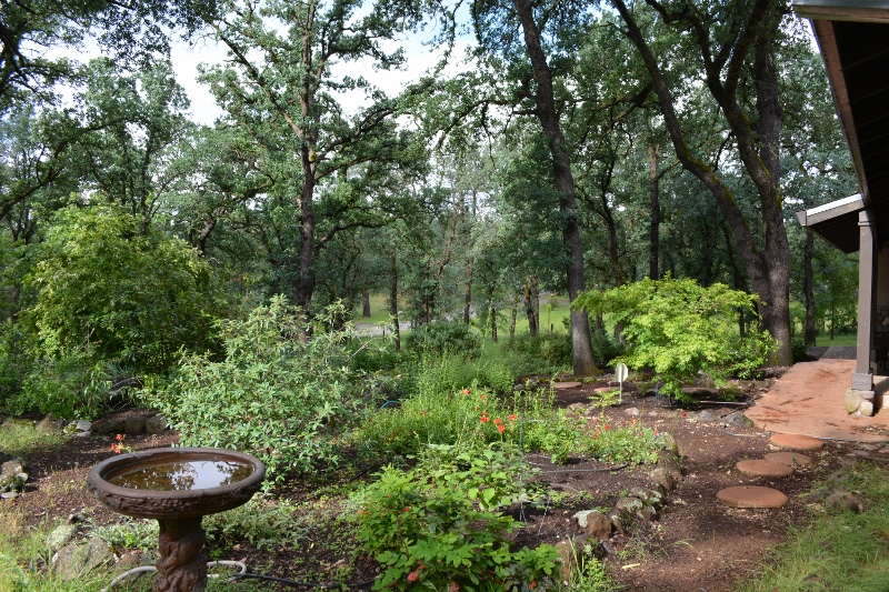 Author Steven T. Callan's front yard is filled with rock gardens of wildlife-friendly plants.