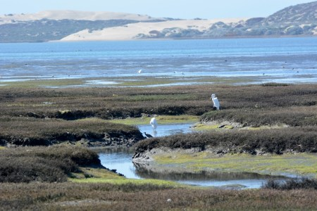 One of the highlights of our recent trip was our hike around the Morro Bay National Estuary. Photo by author Steven T. Callan.