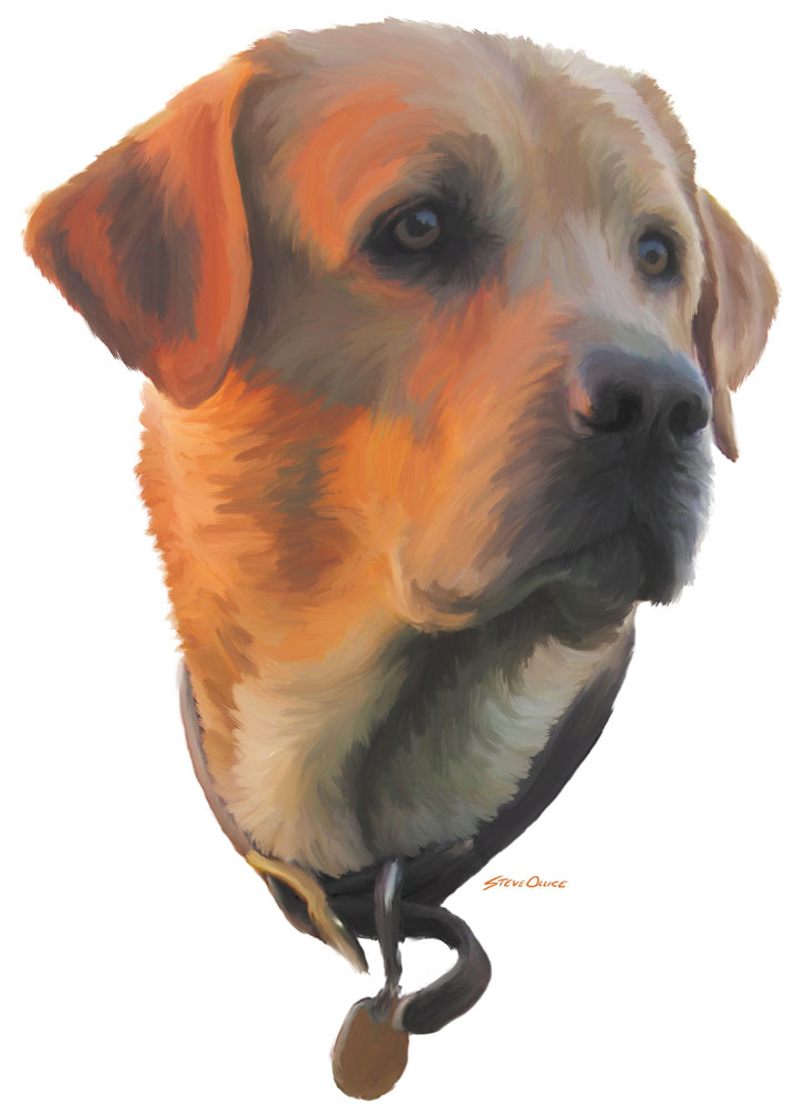 Labrador Head Painting