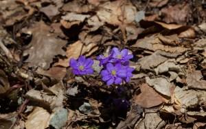 Biograd spring melt 392