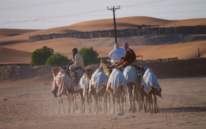 camel 960