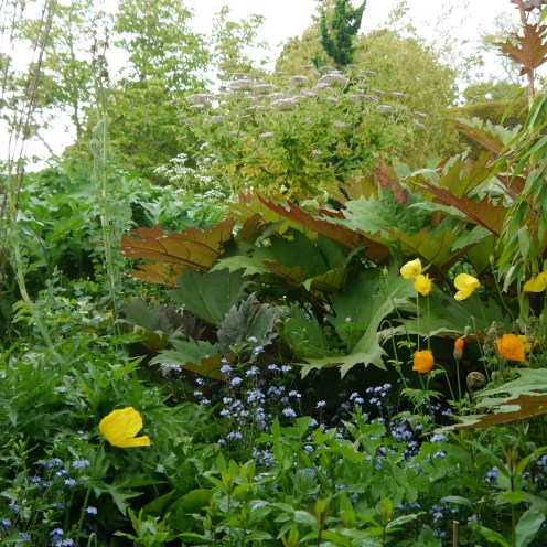 A jungle set alight by yellow poppies