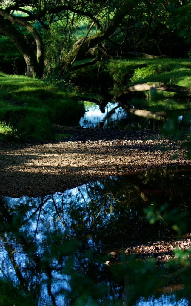 New Forest 11