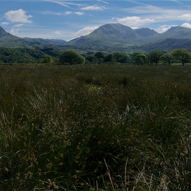 Glaslyn valley view