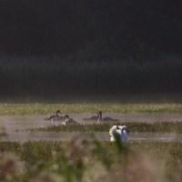 Thompson Water and Thompson Common Pingos