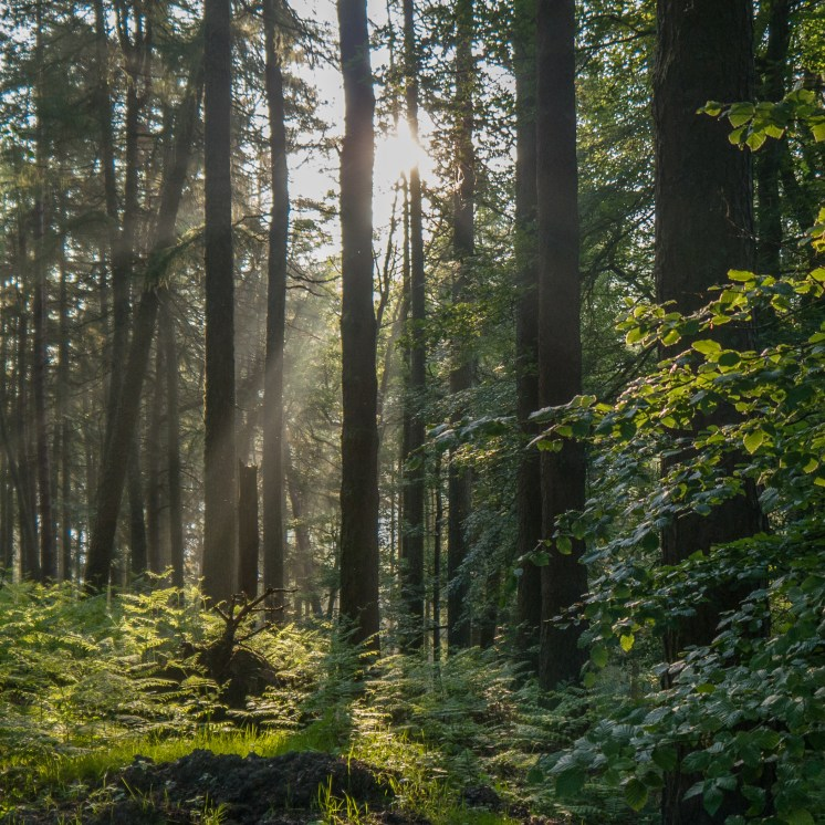 MIxed woodland next to Pen y Garreg