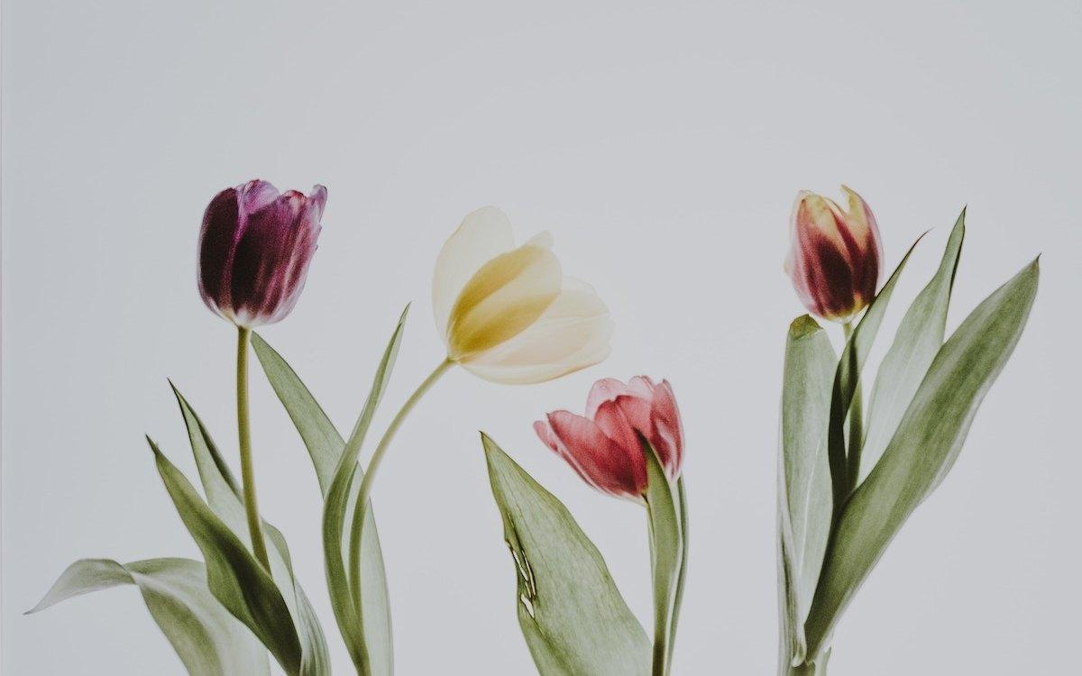Tulip Grove: Lesley Baxter's G&T Classes