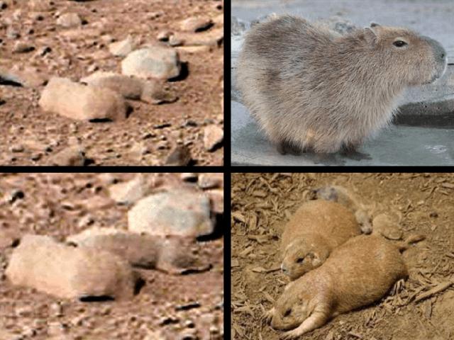 Are NASA MARS photos fake? NASA MARS photos look like they were taken on devon island Canada. Is there life on MARS?