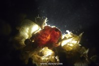 frog fish on stage